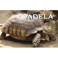 Apadrina a Adela