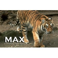 Apadrina a Max
