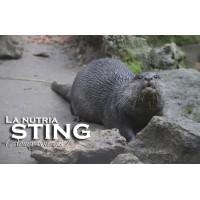 Apadrina a Sting